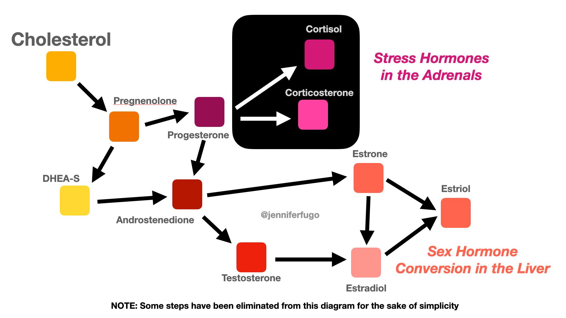 Sex Hormone Conversion Diagram