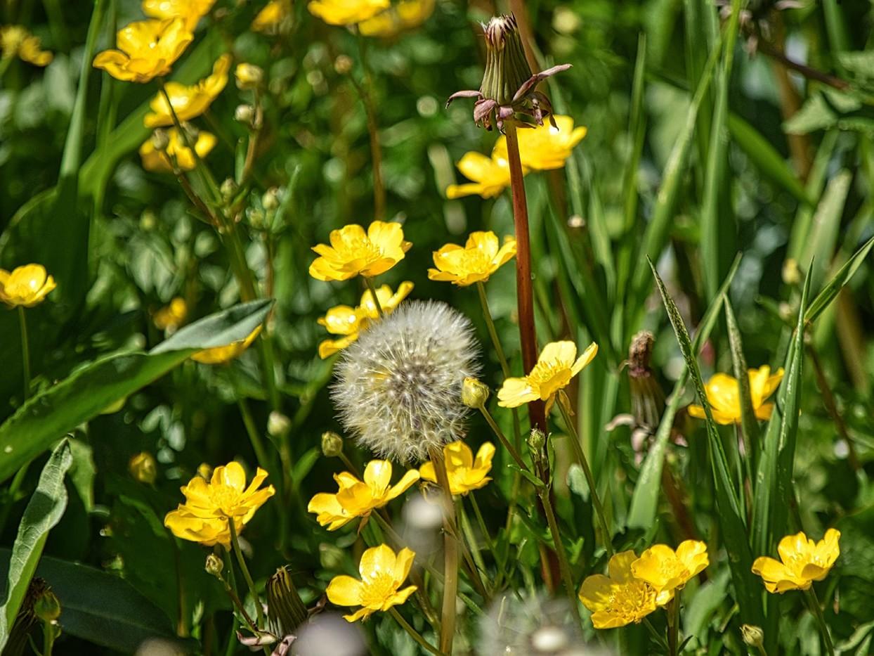 Allergy causing flowers